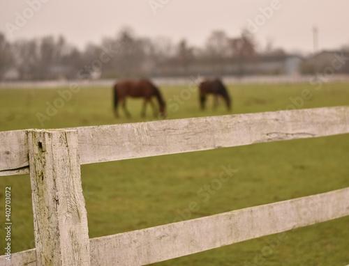 Fototapeta horse in a fence obraz