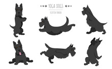 Yoga Dogs Poses And Exercises. Scottish Terrier Clipart