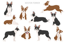 Boston Terrier Clipart. Different Poses Set. Adult And Boston Terrier Puppy