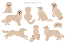 Golden Retriever Dogs In Different Poses And Coat Colors. Adult Goldies And Puppy Set