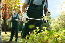 Workers Spraying Pesticide Onto Green Bush Outdoors, Closeup. Pest Control