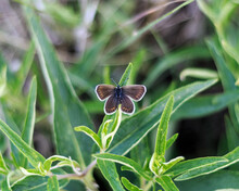 Field Moth Sits On The Grass