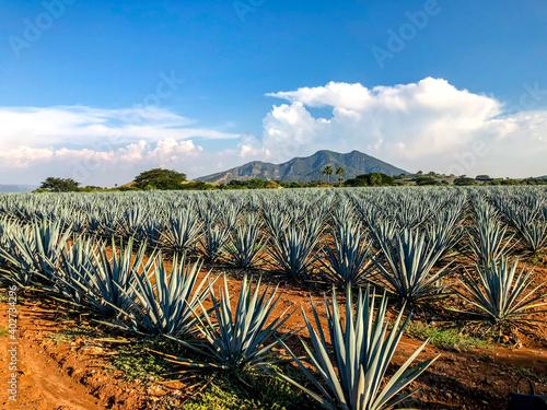 Foto de paisaje de un campo de agave en Guadalajara