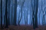 Fototapeta Na ścianę - Las we mgle