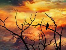 Rabe Im Sonnenuntergang