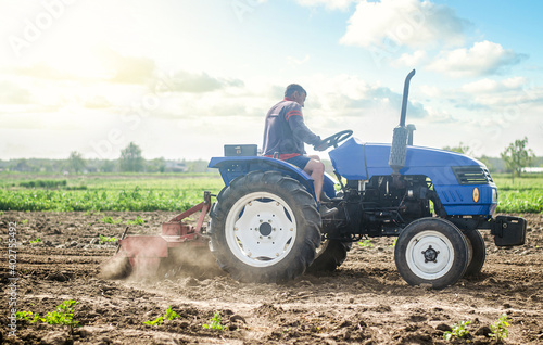 Fototapeta A farmer on a tractor works in the field and raises dust