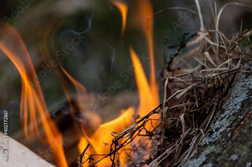Fotografie, Obraz Burning grass serves as kindling in fire close-up