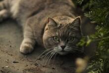Tabby Cat Hiding On The Grass