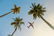 Passenger Airplane Flying Above The Palm Trees Against The Blue Sky.Beautiful Coconut Palm Tree View From Below.