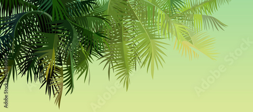 green background with palm leaves lit by the sun Fotobehang