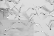 A Motion Blur With Slow Shutter Technique Of Black-headed Gulls Flying At Tubli Bay, Bahrain