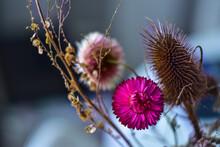 Beautiful Dried Flowers, Macro Photo