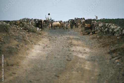 Tablou Canvas Ziegenhirte mit Herde auf Lanzarote