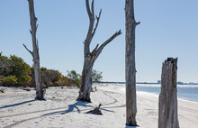 Dead Tree Trunks On The White Beach At Lover's Key In Florida With Blue Sky And Water.