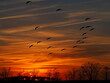dramatic winter sunset over Chesapeake Bay with passing geese