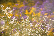 Natural Background With Wildflowers Growing On A Field In A Wild