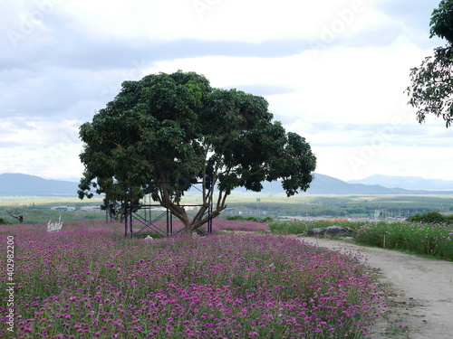 Fototapety, obrazy: Landscape pictures of big green trees and small pink flower fields With sky background Suitable for making wallpapers