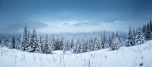 Spectacular Winter Landscape With Snowy Spruces On A Frosty Day.