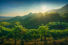 Prosecco Hills, Vineyards At Sunset. Unesco Site. Veneto, Italy