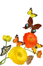 Colorful Wild Flowers And Exotic Butterflies Isolated On White