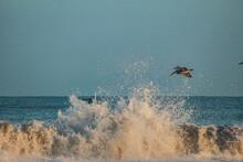 Bird Flying Above Waves