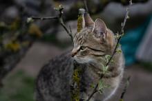 Cat Climbing On The Tree...