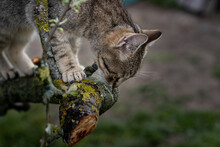 Cat Climbing On The Tree...