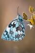 piękny motyl motyl na różowym tle