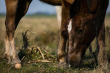 Caballo, Horse