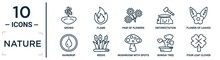 Nature Linear Icon Set. Includes Thin Line Grows, Pair Of Flowers, Flower Of Leaves, Reeds, Bonsai Tree, Four Leaf Clover, Raindrop Icons For Report, Presentation, Diagram, Web Design