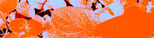 Black Garden Banner. Autumn Tropical Photography. Blue Woman Design. Pink Fashion Element. Orange Amazing Wallpaper. Red Meditation Photo. Black Abstract Paper.