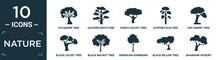Filled Nature Icon Set. Contain Flat Sycamore Tree, Eastern White Pine Tree, Honey-locust Tree, Slippery Elm Pin Cherry Black Locust Black Walnut American Hornbeam Black Willow Shagbark Hickory.
