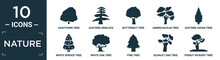 Filled Nature Icon Set. Contain Flat Hawthorn Tree, Eastern Hemlock Tree, Butternut Tree, American Elm Eastern Cedar White Spruce White Oak Pine Scarlet Oak Pignut Hickory Icons In Editable Format..