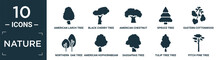 Filled Nature Icon Set. Contain Flat American Larch Tree, Black Cherry Tree, American Chestnut Tree, Spruce Eastern Cottonwood Northern Oak American Hophornbeam Sassafras Tulip Pitch Pine Icons In.