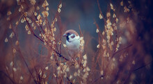 A Sparrow Is Hiding In The Bushes.