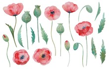 Big Set Of Watercolor Painted Red Poppy, Flowers, Buds And Leaves Elements.