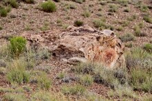 Why Do People Want To Disturb Ancient Petrified Trees?