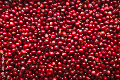 Red fresh cherry coffee beans background Fototapete