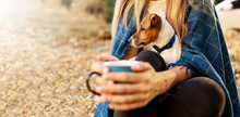 Not Recognizable Girl In Holding Little Dog Jack Russel And Cup In Hands. Happily Spending Time On Picnic In Park Covered Blue Blanket On Sunset Autumn Forest Background