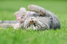 Cute Tabby Cat Lying On Meadow