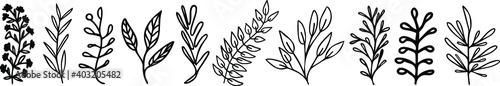 Verschiedene Pflanzen Zeichnungen Fotobehang