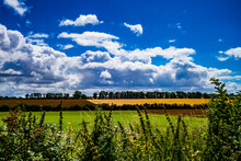 Landscape With Cornfield And Clouds, South Downs National Park, England