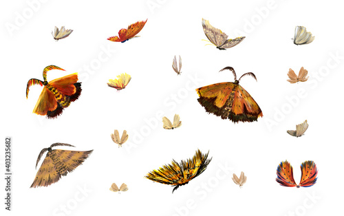 Fototapeta A set of golden fluffy authentic moths and butterflies isolated on a white background