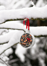 Homemade Teacup Bird Feeder Hanging On A Tree In The Winter Garden. Help People To Animals. Copy Space.
