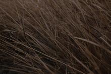 Texture Grass Boho