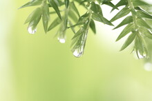 Water Droplets On Green Leaves After The Rain