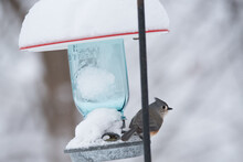 Tufted Titmouse Sitting On A Feeder Covered In Snow.