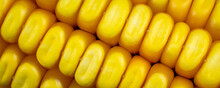 Yellow Corn Kernels With Visible Details. Background Or Texture