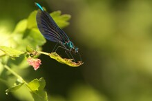 A Dragonfly Is Resting On A Tree Leaf
