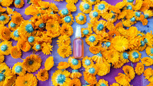 Clear Shot Of Many Calendula Flowers, Freshly Cut From Their Stems, Also Featuring Organic Calendula Oil In A Small Spray Bottle.